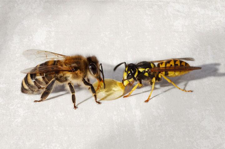 ape contro vespa